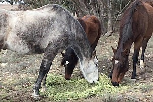 Breakfast with The Horses